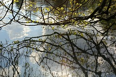 Reflections: Spring (alison2mcewan) Tags: clouds ripple water branches trees foliage mirroreffect reflections