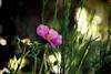 ... (Theophilos) Tags: flowers light bokeh spring nature λουλούδια φωσ άνοιξη φύση