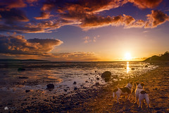 colourful light... (Kerriemeister) Tags: dogs dog nikon max maxandpaddy paddy jack jackrussellterrier russell terrier terriers beach sea tide coastal brothers clouds sky sunset