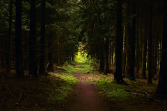 Deepest Forest (Michael Eickelmann) Tags: deep tief forest wald dark dunkel curse bewitch verwunschen way weg path pfad trees bäume light licht panasonic lumix fz 200