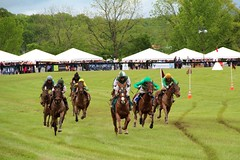 Racing for the finish (seventh_sense) Tags: virginia gold cup horse race racing equestrian great meadow track gallop galloping sprint racehorse racehorses jockey jockeys field goldcup virginiagoldcup greatmeadow spring 2017