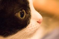 Ojito de Tuna (Letua) Tags: ojo gato mascota amor nariz eye nose pet cat