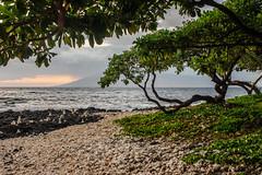DSC04052.jpg (jaғar ѕнaмeeм) Tags: kihei hawaii unitedstates us wailea maui marriott luau