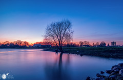 Another night at the river V (Robert Stienstra Photography) Tags: rhine river riverbanks riverscape riverrhine riverscapes riverside dutchriver landscape landscapephotography bluehour bluehourphotography sunset sunsetphotography sunsets sunsetporn reflection reflections tree trees twilight outdoor tokina1224mm robertstienstraphotography wageningen gelderland geldersestreken waterscape waterscapes beach water lake dusk sky