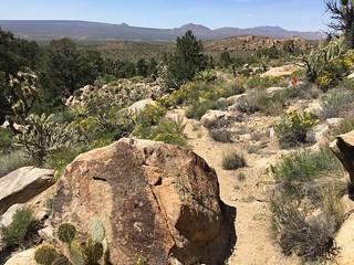 Spring - Mojave National Preserve