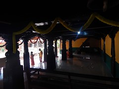 KEKKAR MUTT Photos Clicked by CHINMAYA M.RAO on 16-7-2014 (11)