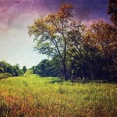 Rural Oklahoma . . . #lexington #lexingtonoklahoma #oklahoma #ruraloklahoma #rural #oklahomaphotographer #oklahomaphotography #stackables #snapseedapp #mextures #mexturesapp #m3xtures #iphone #iphone6s #iphoneographer #iphoneography #mobilephotography #mo (yosmama151) Tags: snapseed stackables rural cellphoneshot mobilephotographer mobilephotography iphoneographer iphone6s iphone oklahoma lexington mextures instagramapp square squareformat iphoneography