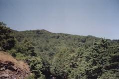 TARAMA351