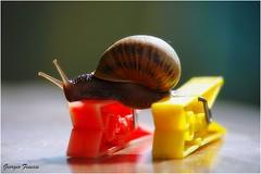 Una modella diversa (GiophotoArt) Tags: lumaca snail red yellow