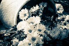 ..a good enough mother.. (dawn.tranter) Tags: flowers sepia basket petals closeup mother enough good intuition trust gentle mothersday