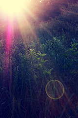 Lens Flare...(Explored) (Patlees) Tags: field lensflare sun rays