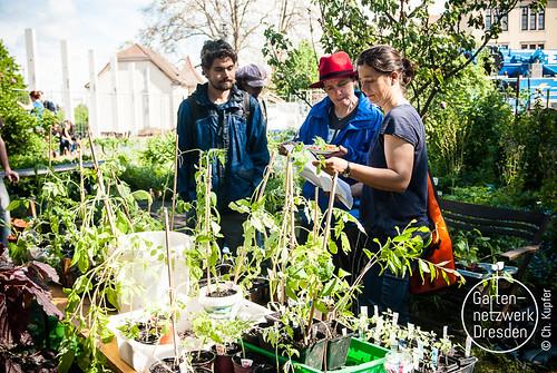 gardeningfromscratch_I_43