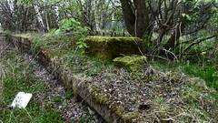Penistone station - old woodhead/GCR platforms     April 2017 (dave_attrill) Tags: platforms remains overgrown electrification support base penistone station building great central railway electrified woodhead sheffield victoria manchester picadilly closed 1970 1955 stocksbridge engine transpennine upper don trail wortley wadsley neepsend dunford bridge thurgoland tunnel oxspring barnsley junction allweather cycleway bridleway footpath stopping gantry concrete oughtibridge oughty platform 1983