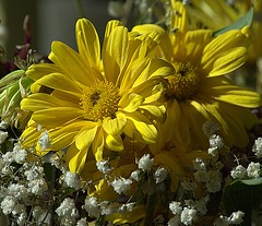 A Little Sunshine (swong95765) Tags: flowers boquette yellow babiesbreath visual cheers distraction