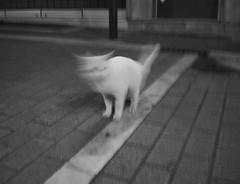 Demon cat (xaristhegod42) Tags: nikond5500 cat devil demon monochrome face white black