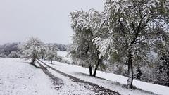End Of April - Austria (Been Around) Tags: europeanunion april aprilsnow snow neuschnee newsnow spring tree trees baum wiese meadow magdalenaberg kremstal morning eu europe europa autriche inzersdorf inzersdorfimkremstal oberösterreich upperaustria österreich austria