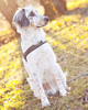 Pixel McFlurry (Sonatica) Tags: hund pixel mcflurry dog puppy welpe photography animal pet