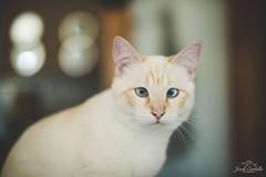 the cat. (Jordi Corbilla Photography) Tags: cat spain nikon d750 50mm f14 jordicorbilla jordicorbillaphotography animals pets