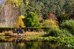 (Laszlo Papinot) Tags: mountmacedon famousflickrfive tievetaragarden garden park lake pond vegetation tree autumn