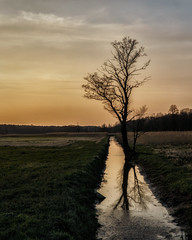 lone tree (K_R_R_2) Tags: sony a6000 nex selp18105g tree sunset lone