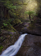 The Leap - Liffey Falls, Tasmania (beaugraph) Tags: waterfall tasmania liffeyfalls thespout theleap cascade australia rainforest treeferns longexposure light leadinglines lush