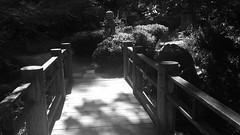 (sftrajan) Tags: strybingarboretum japanesemoonviewinggarden bw blackandwhite android sanfrancisco sanfranciscobotanicgarden botanischergarten botanicalgarden goldengatepark 2017 spring jardinbotanico jardínbotánico jardinbotanique botaniskhave botaniskträdgård