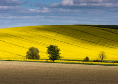 Fields (Peter Quinn1) Tags: avebury wiltshire wessexdowns oilseedrape rapeseed shadows agriculture arablefields crops farmland