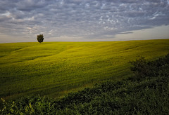 Tuscia (sirVictor59) Tags: tuscia lazio altolazio italy italia italians nature natura natur viterbo verde cielo green etruria paesaggio sirvictor59 erba nuvole 10mm nikond70