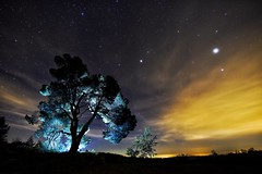 Noche Mágica (bodyaristarco) Tags: iluminarconlinternas lightpainting night nikond750 tokina1628 tokina arbol contraluz valenciadenoche