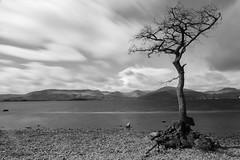 Lone Tree (Mark Alan Andre) Tags: markalanandre scotland travel unitedkingdon tree black white bw bnw monochrome long exposure clouds water beach