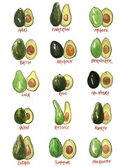 19 Benefits Of Avocado (theoilyguru.org) Tags: beauty cooking essential oils healing health natural antiaging antioxidant arthritis avocado baking bone boost energy climacteric diabetes digestive aid fat replacement fruit galveston guacamole hair care healthy eyes skin heart kidney liver low cholesterol minerals morning sickness help prevents bad breath protects reduced cardiovasvular disease reduces some cancers research study super food treats vitamin k deficiency vitality vitamins weight management