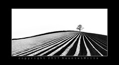 Ballyrogan High Key (RonnieLMills) Tags: high key lone tree ploughed field furrows mono mayhem monochrome bw blackandwhite noiretblanc blancoynegro leading lines