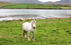 Dingle Peninsula (terryballard) Tags: