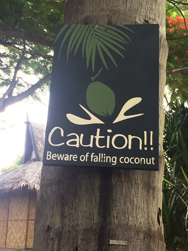 Caution! Falling Coconuts