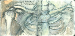 ¿Puedes alcanzarla? 10 de mayo, 2017. (Sharon Frost) Tags: ribcage clavicle coracoidprocess skeletons anatomy sternum sharonfrost daybooks journals sketchbooks drawings paintings notebooks