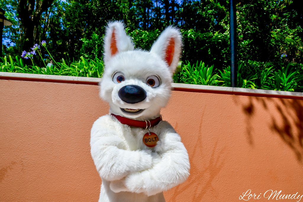 The World's Best Photos of bolt and wdw - Flickr Hive Mind