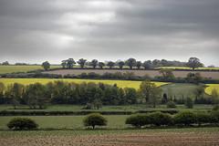 Norfolk Countryside [127/365 2017] (steven.kemp) Tags: norfolk countryside nature sky field tree scenery scenic landscape ringland weston longville colton oil seed rape cloudy bike ride