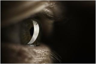 Macro Mondays (Option) - Eyes(s) - Eye