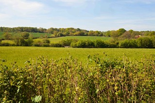 Sussex Weald Countryside
