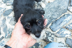 Yes, I'm small but pretty! (JOAO DE BARROS) Tags: barros joão dog animal portrait
