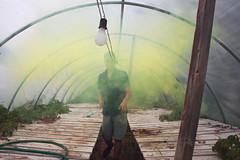 Smoke House/Green House (Anton Redding) Tags: smoke smokebomb bomb anton redding green greenhouse house abandoned new york photographer photography urbex urben exploring exploration abandonment abandon gay guy boy male self selfportrait portrait markii 5d dslr