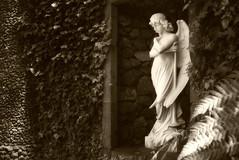 Angel Statue, Madeira (stuart.shafran) Tags: angel statue madeira sepia