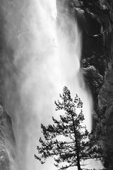 15042017-_DSC0149 (Juan C. Ramon) Tags: landscape yosemite anseladams blackwhite nature bw waterfall