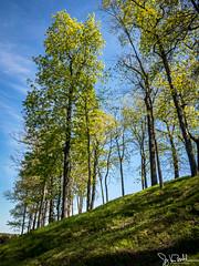 134/365 - Trees