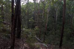 Dural Nature Reserve (Byron Taylor) Tags: duralnaturereserve dural naturereserve australia nature wildlife canon canon7d landscape