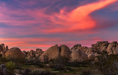 Yet Another Joshua Tree Sunset