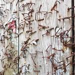 Staple wall thumbnail