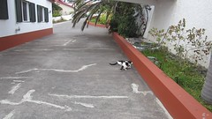 MVI_8527 (Chat Malicieux) Tags: video cats katzen joana chico