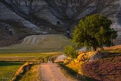 Por caminos rurales (allabar8769) Tags: camino camposdecastilla montaña paisaje sanmartídevalbení valladolid vegetación atardecer árboles