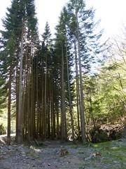 Eugi, Navarre, Espagne: arbres près des ruines de la Manufacture Royale d'Armes (Marie-Hélène Cingal) Tags: espagne españa spain navarre navarra eugi